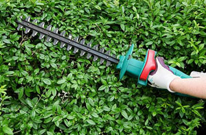 Hedge Cutting Cirencester Gloucestershire GL7