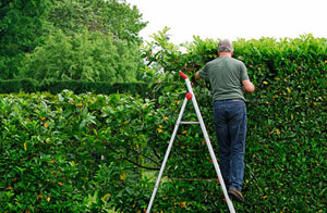 Bangor Hedge Trimming