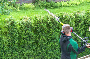 Hedge Trimming in Leigh