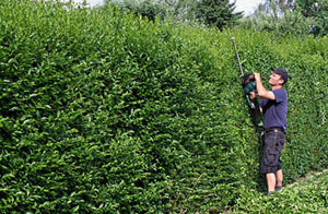 Hedge Trimming Frodsham