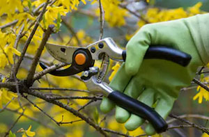 Shrub Pruning Wivenhoe (CO7)