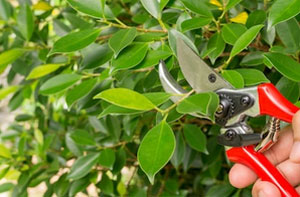 Shrub Pruning Whitley Bay (NE25)