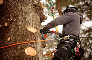 Tree Surgeons Knaresborough, North Yorkshire (01423)