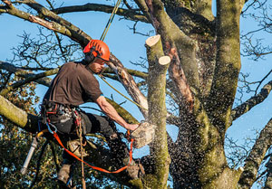 Tree Surgeons Port Talbot, Wales (01639)